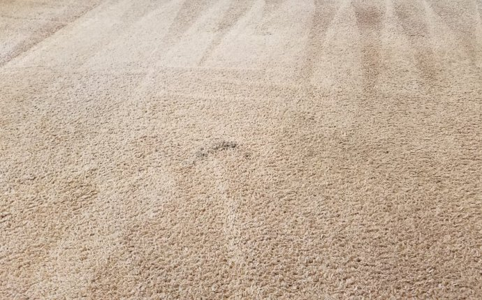 Dollar Carpet Cleaning - 65 Reviews - Carpet Cleaning - Chula